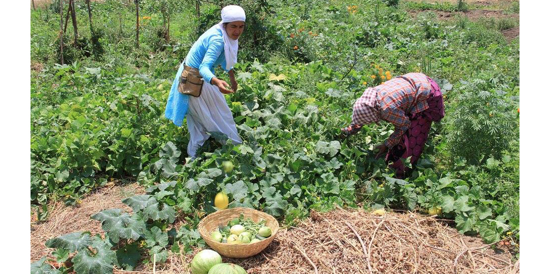 Harvesting fresh vegetables from the mandala