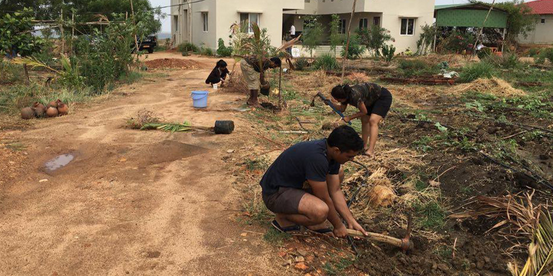 Planting coconut trees in Zone 1